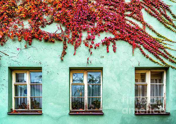 Picturesque Window 2 by Miles Whittingham